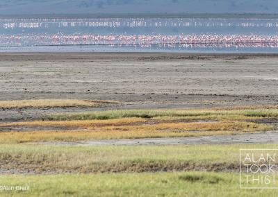 flamingo_pano