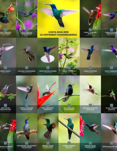 22_hummingbirds