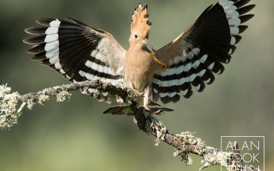 Photographing birds in Spain