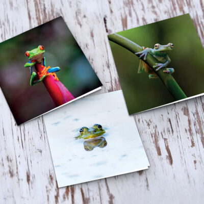 Frogs Greeting Card Set
