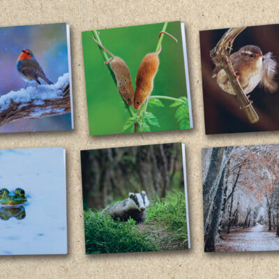 6 Nature Photography Greetings Cards