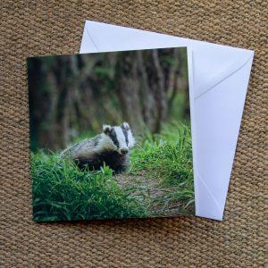 Badger Blank Greetings Card