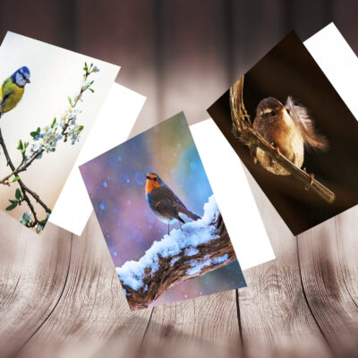 Pack of 3 Garden Bird Photography Greeting Cards