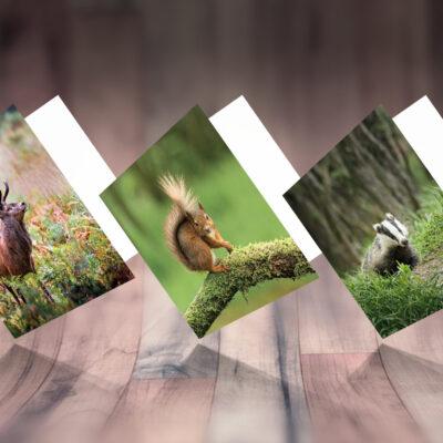Set of 3 Woodland Animal Photo Greeting Cards