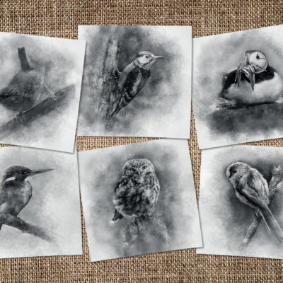 Pack of 6 Illustrated Bird Greeting Cards