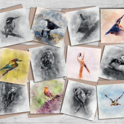12 Illustrated Bird Greeting Cards