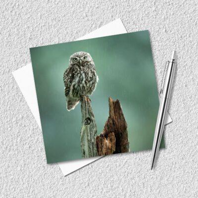 Little Owl Blank Greeting Card
