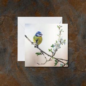 Blue Tit Bird Greetings Card