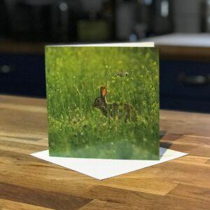 Bunny Rabbit Greetings Card
