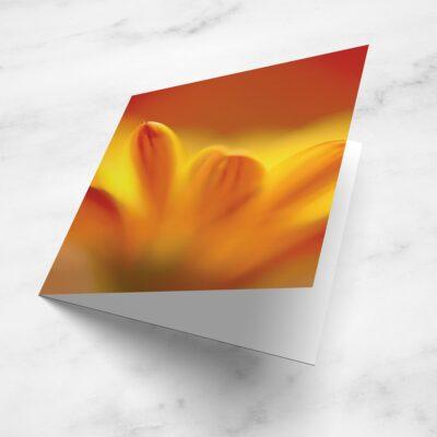 Flower Blank Greetings Card