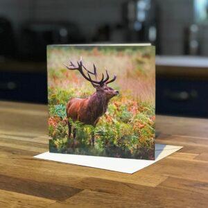 Red Deer Stag Greetings Card
