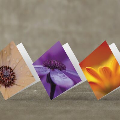 Set of 3 Flower Photo Greeting Cards