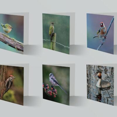 Set of 6 Blank Bird Greeting Cards